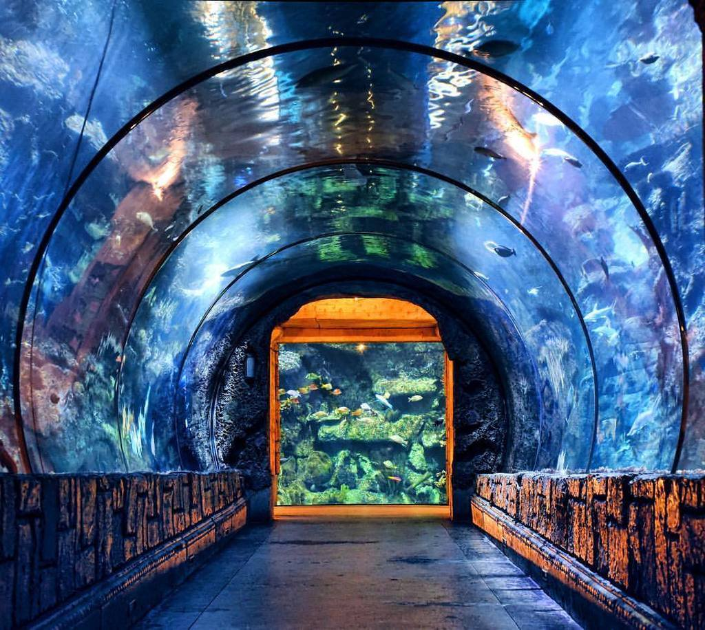 Shark Reef Aquarium - LasVegasRealEstate.com
